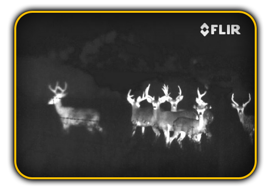 night vision FLIR deer
